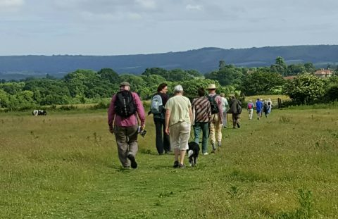 A group of people are walking across a field towards Stopham