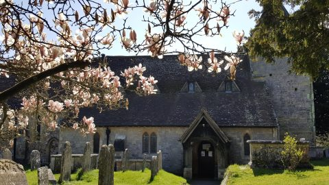 Image of St Mary's Church Fittleworth with magnolia in blossom in front